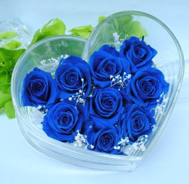 hoa hong xanh dep 1