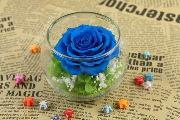hoa hong xanh dep 13