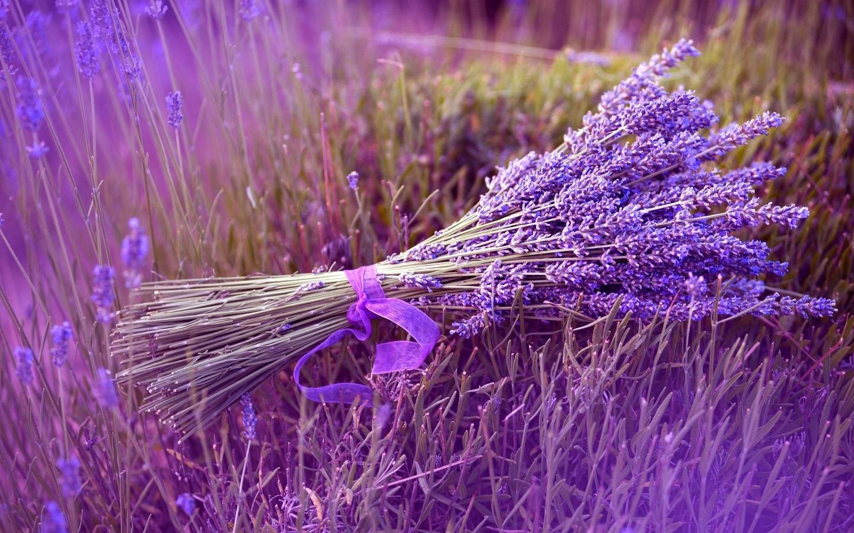 bo hoa oai huong
