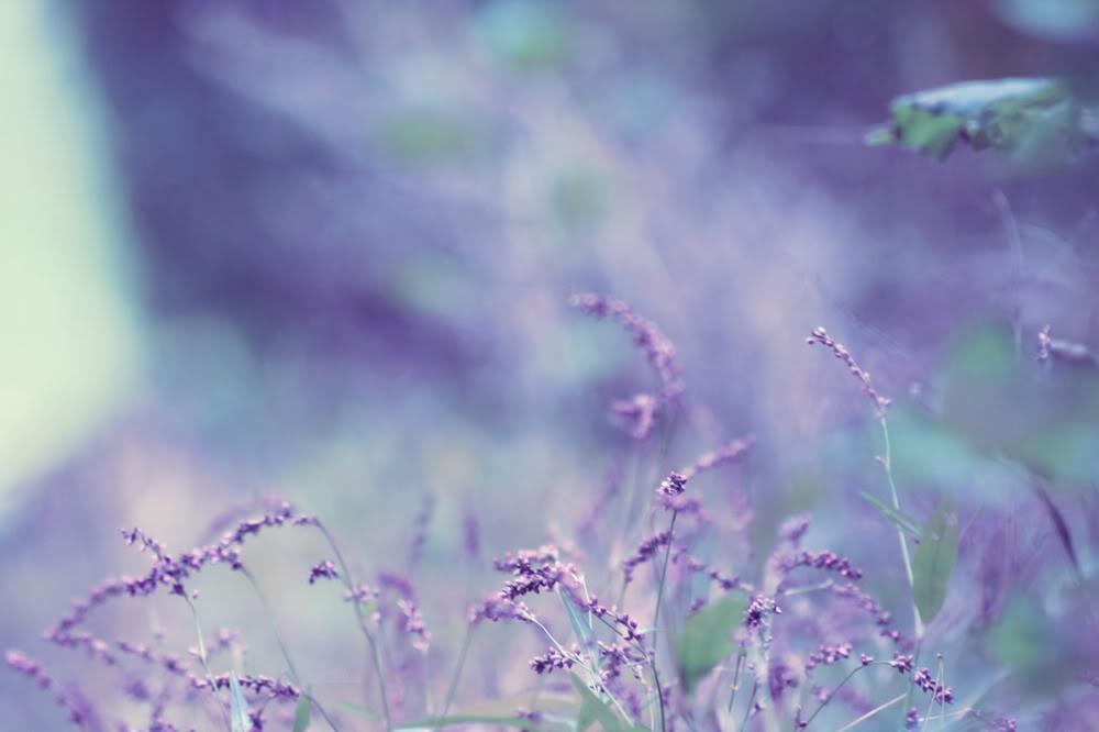hinh anh hoa oai huong dep