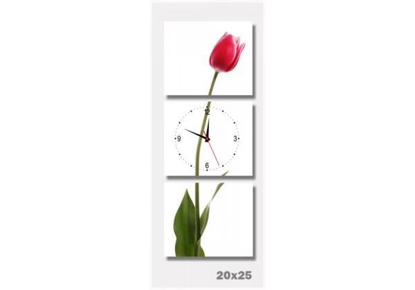 tranh dong ho hoa tulip do
