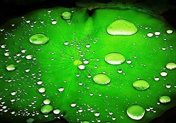 Những giọt nước đọng trên lá xanh